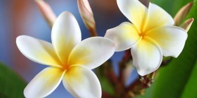 Hawaiianische spirituelle Ganzkörpermassage